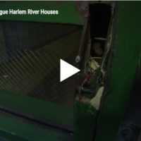 3 Big Problems Plague Harlem River Houses
