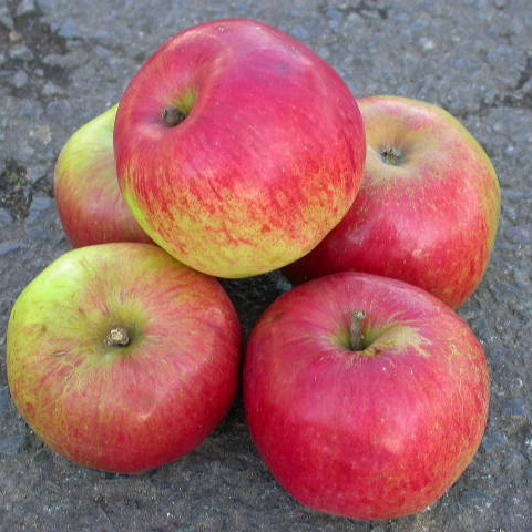 Late Season Dessert Apples