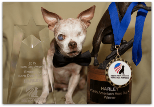 Harley with his Hero Dog Awards
