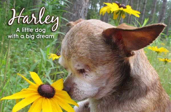 harley-2017-calendar-meta