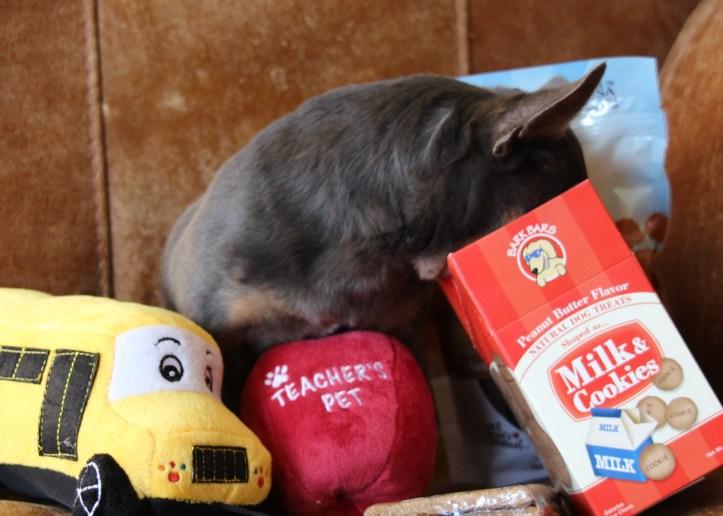 cricket-pet-gift-box-10-8-16-4