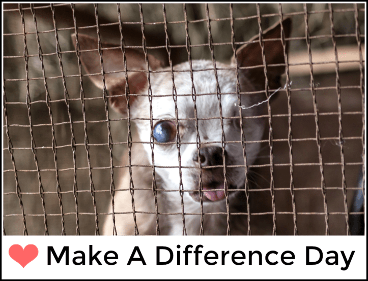harley-make-a-difference-day-2016