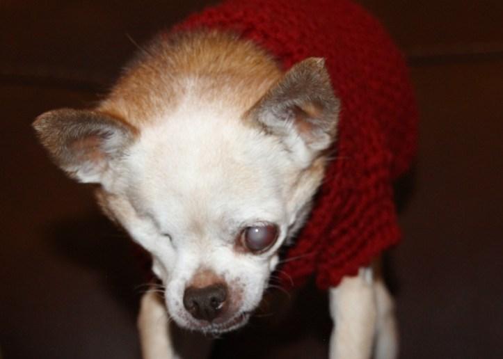 winston-new-red-sweater