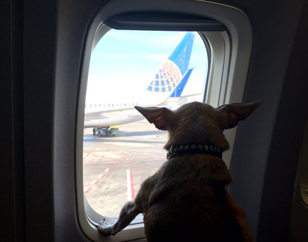 Harley always flew United Airlines!