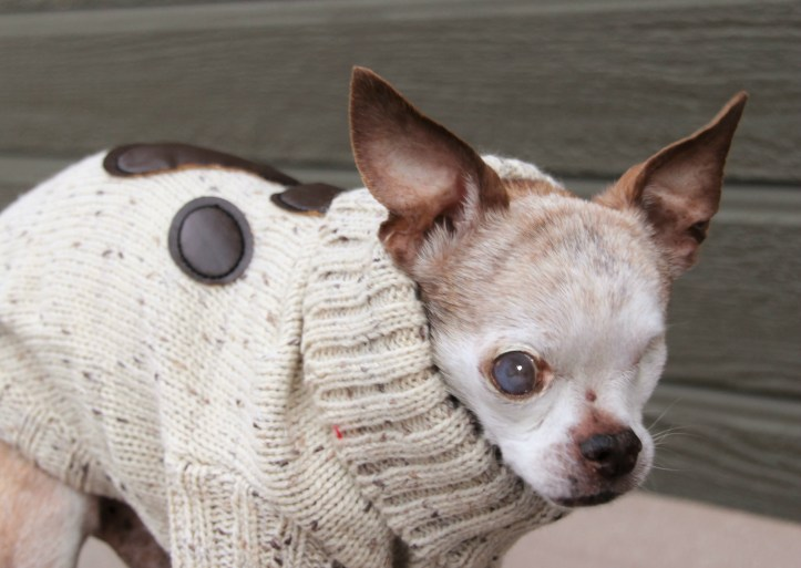 harley-sweater-from-desiree