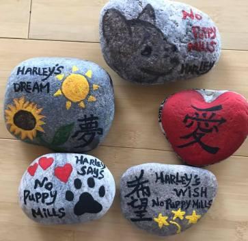 LLH Rocks (9)