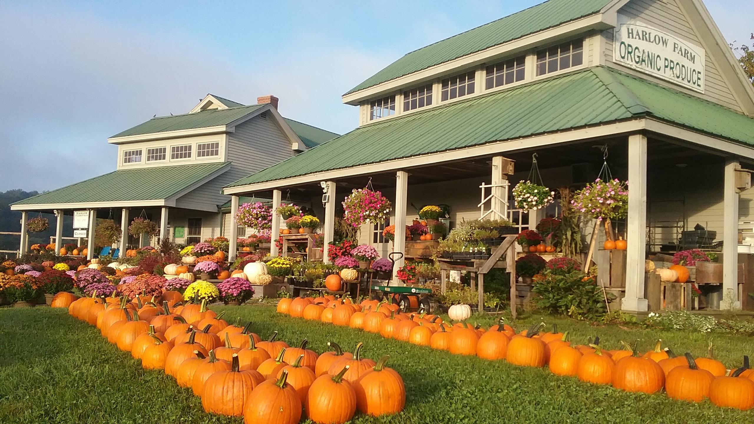 Vermont Fall Farm Wallpaper Harlow Farm An Organic Farm Nestled Along The Shores Of