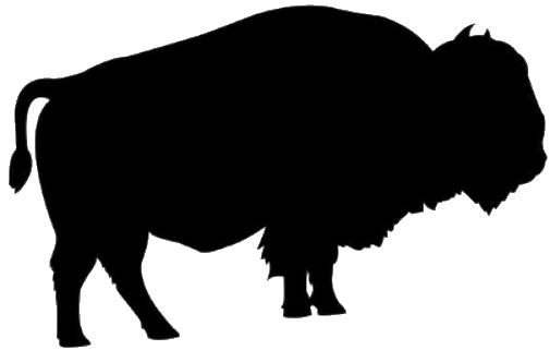 Harlow Ranch Bison