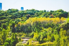 don valley (2)