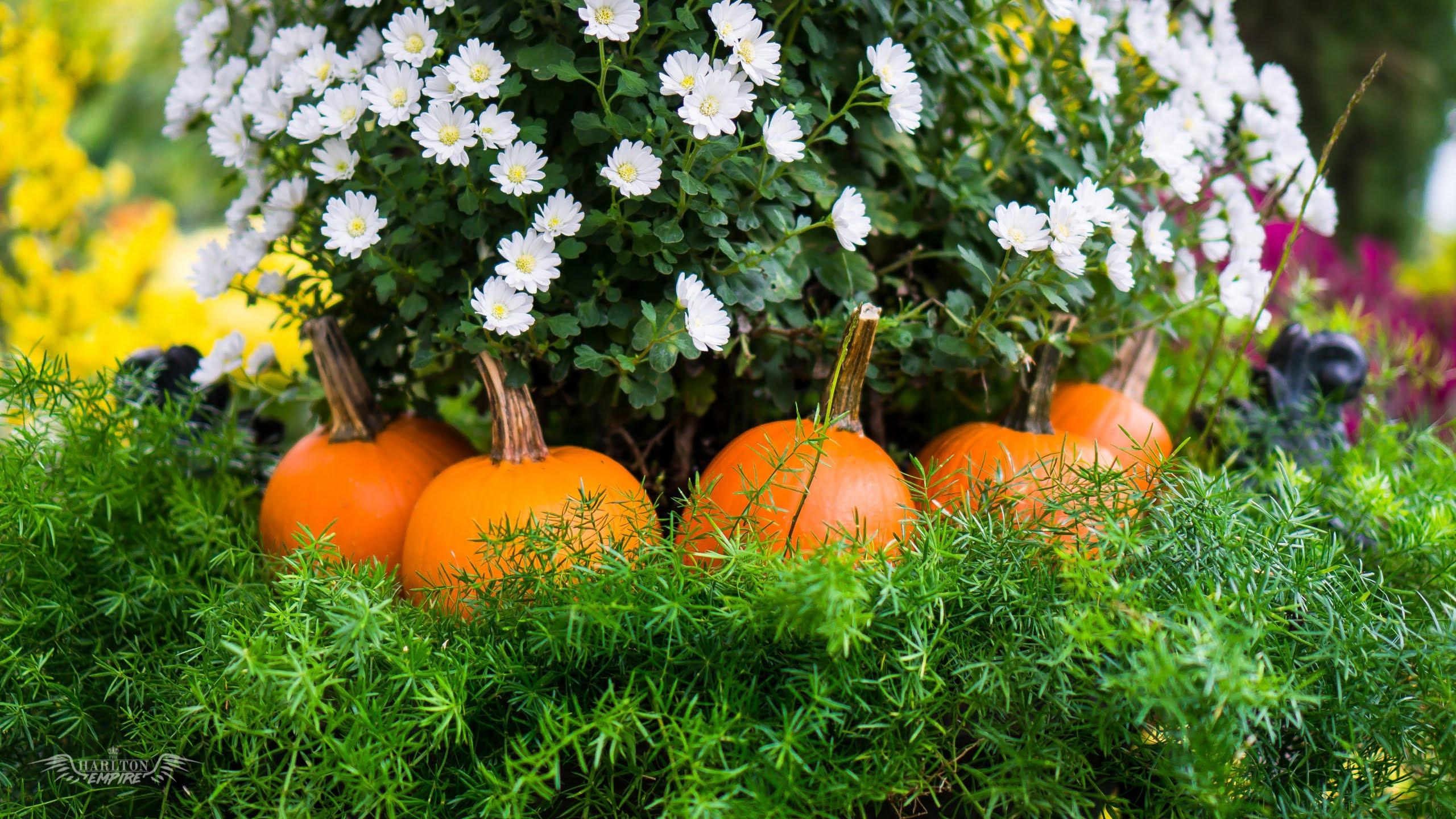 Free Fall Autumn Desktop Wallpapers 16