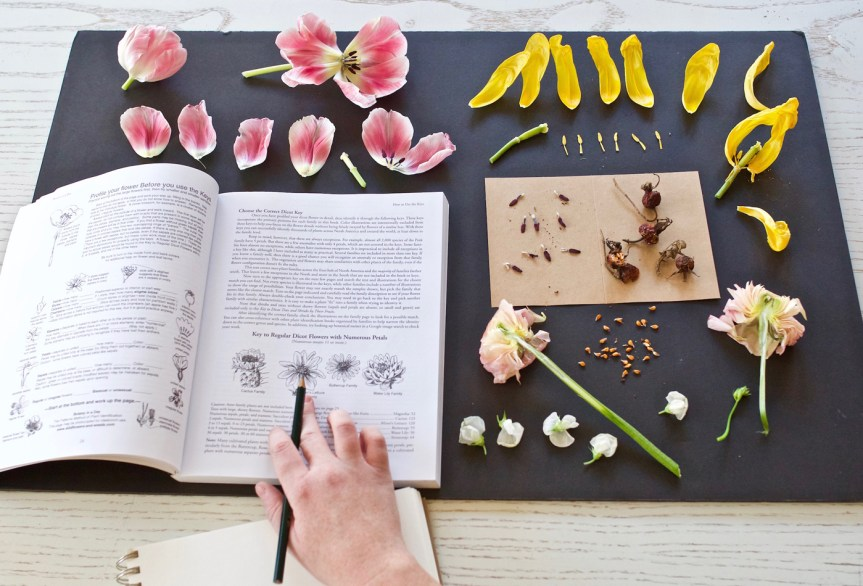 the intermediate herbal course presented by herbal academy - herb studies copy