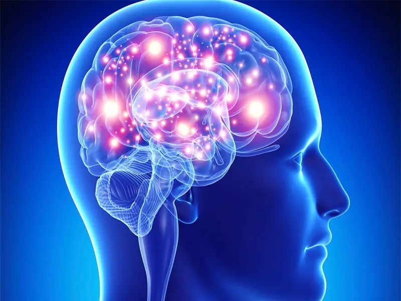 Por qué el cerebro es el órgano sexual más importante