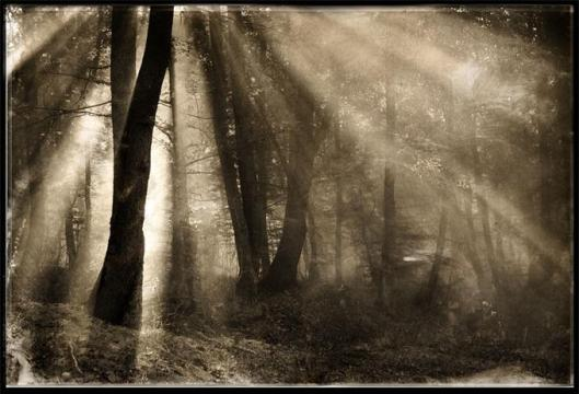 forest_7