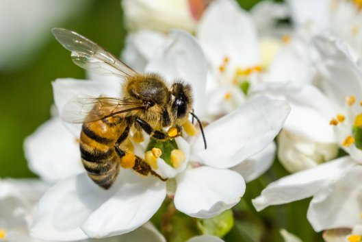 02beesproject-intro-largehorizontaljumbo