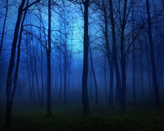 forest_8