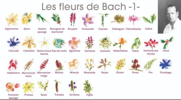 Visuel-Fleurs-de-Bach-1-1.jpg