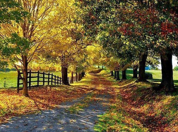 """Résultat de recherche d'images pour """"photos : paysages d'automne"""""""