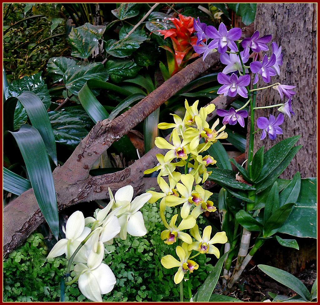 JARDIN DES ORCHIDEES  MON EVASION NATURE BLOG