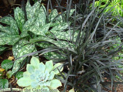 mondo-grass-foliage-shape-copy