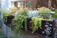 One Windowbox, Four Ways | Harmony in the Garden