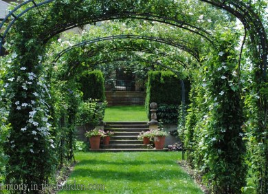 Linda Allard's garden
