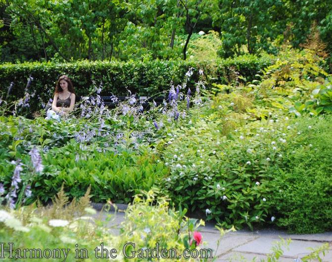 Celebrating Community Gardens | Harmony in the Garden