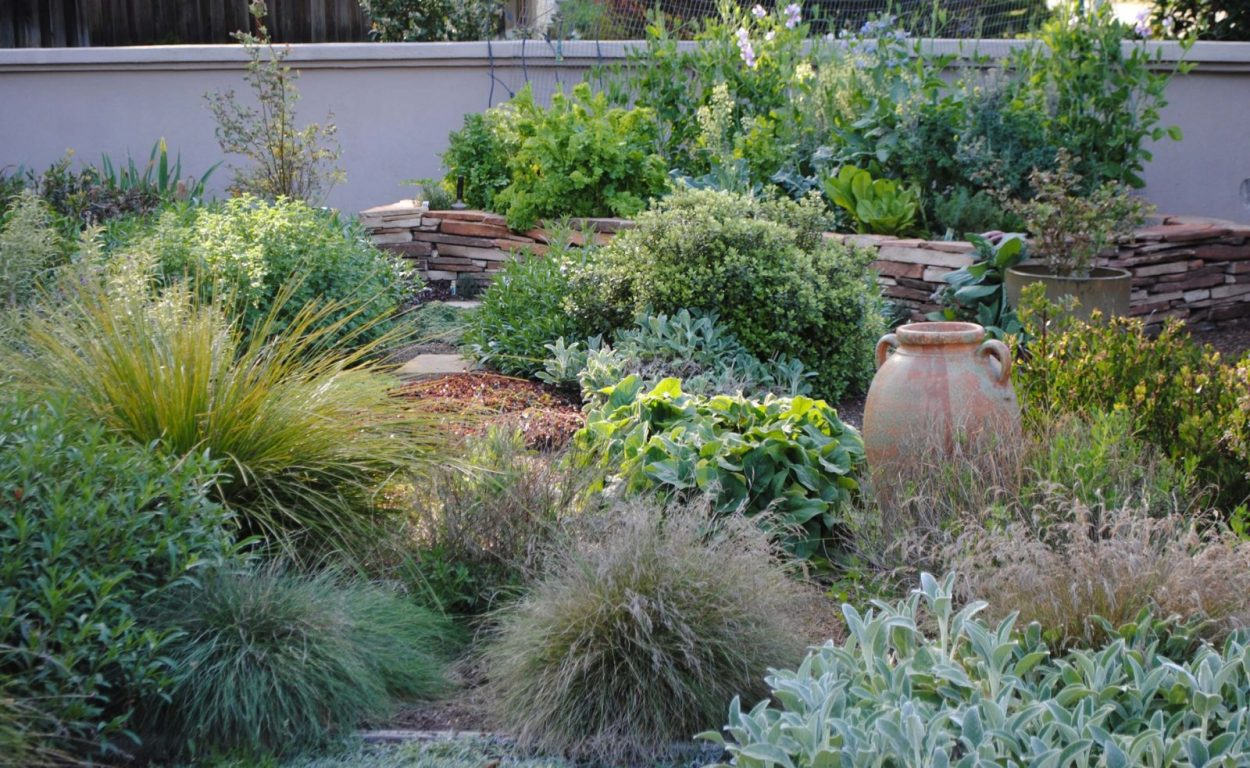 Lush Layered and LawnFree  Harmony in the Garden