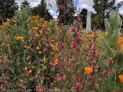 sacramento historic rose garden-california native garden-northern california-pioneer cemetery-wildflowers