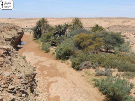 Oued el Habchi