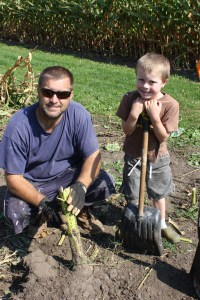 The boys cut down the sunflowers. This sunflower was a nemesis to Sam because the stalk was so big. He had to get a spade to get the stalk out.
