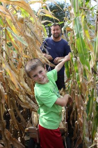 Thankfully, we had a nice day to harvest popcorn. It is interesting to see how different the varities of popcorn are from the stalk size and strength to the ear size to the size of the kernels.