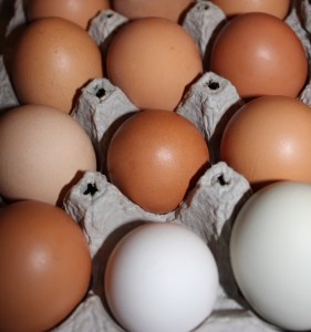 Our chickens are still producing eggs during the cold winter.  Let us know if you are interested in purchasing any for $3 per dozen. On another note, the boys are interested to know if you like brown, white or the blueish/green colored eggs the best - what do you prefer?
