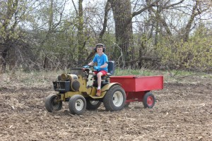 PIcking rock is part of preparing the field so we don't ruin our tiller or other equipment.