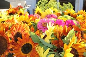 Flower varieties this week.