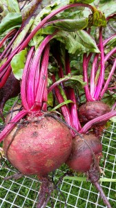 Detroit Dark Red Beets