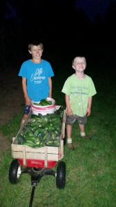 Cucumbers are starting to come to an end, but we still filled a wagon full.