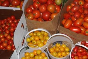 Tomato varieties abound.