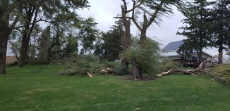 We are grateful that our largest pine trees and Cottonwood trees stayed standing.
