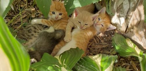 Farm cats are so fun to tame.