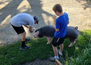 Animals all around. Sam was out walking his 4-H pig. As you can see the kittens had an interesting view.
