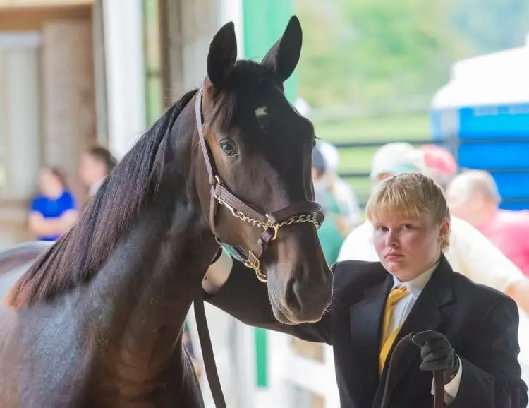 The Morrisville Yearling Sale provides critical experience to the school's equine students, many of whom go on to work in the industry | Jim Gillies