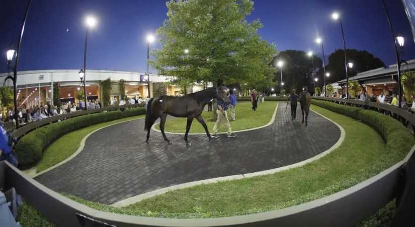It was the third huge night in a row at the Lexington Selected Yearling Sale.   Dave Landry