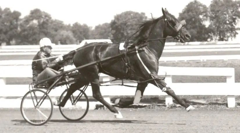 Bret Hanover at The Red Mile before his 1:53.3 time trial in 1966. | Courtesy Dean Hoffman
