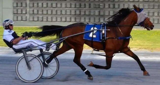 Master Clave (Ross Wolfenden) won the $100,000 DSBF sophomore male trot on Monday at Dover Downs | Foto Won