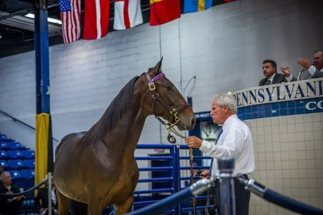 Triscari Video Web and Marketing | One of Myron Bell's purchases was Honorat Hanover, a son of Captaintreacherous out of Hana Hanover that was the top pacer sold at $400,000.