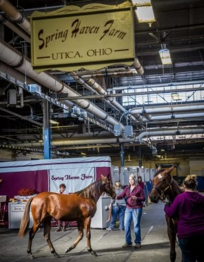 Triscari Video Web and Marketing | Spring Haven Farm bred and sold the Sportswriter colt that fetched $100,000 Wednesday.