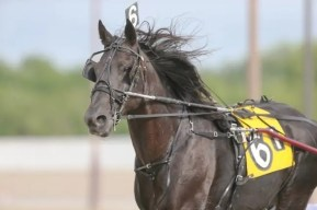 Dean Gillette | Night Pro will soon be retired to stallion duty after earning nearly $1 million in his racing career.