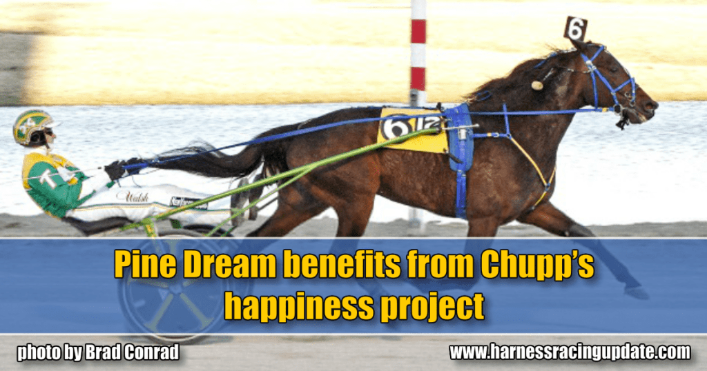Pine Dream benefits from Chupp's happiness project