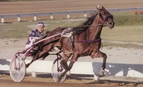 USTA | Niatross (with Galbraith) won 37 of 39 starts and was named both the 1979 and 1980 Horse of the Year.