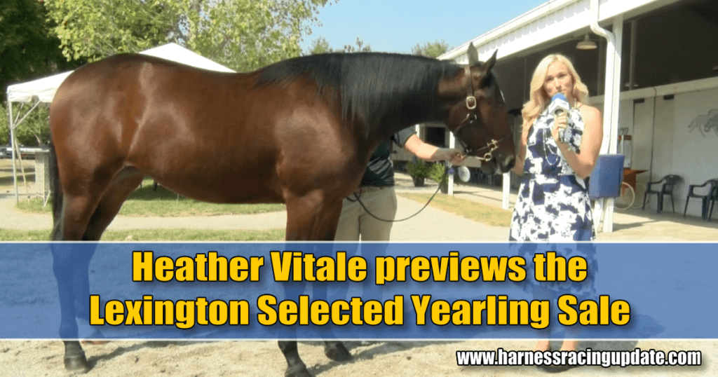 Heather Vitale previews the Lexington Selected Yearling Sale